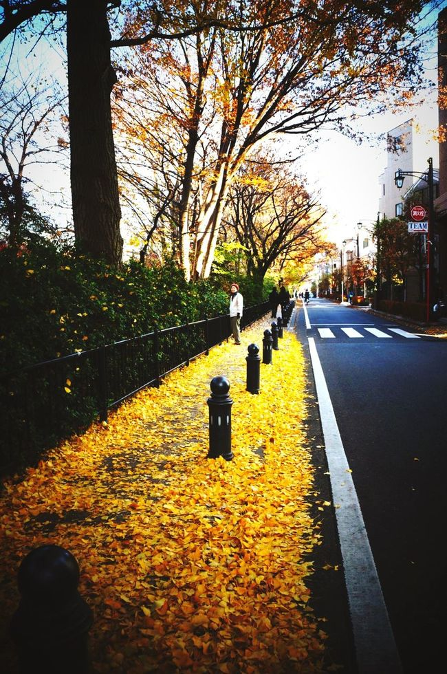 Autumn Yellow Tokyo Street Photography Tokyo Days