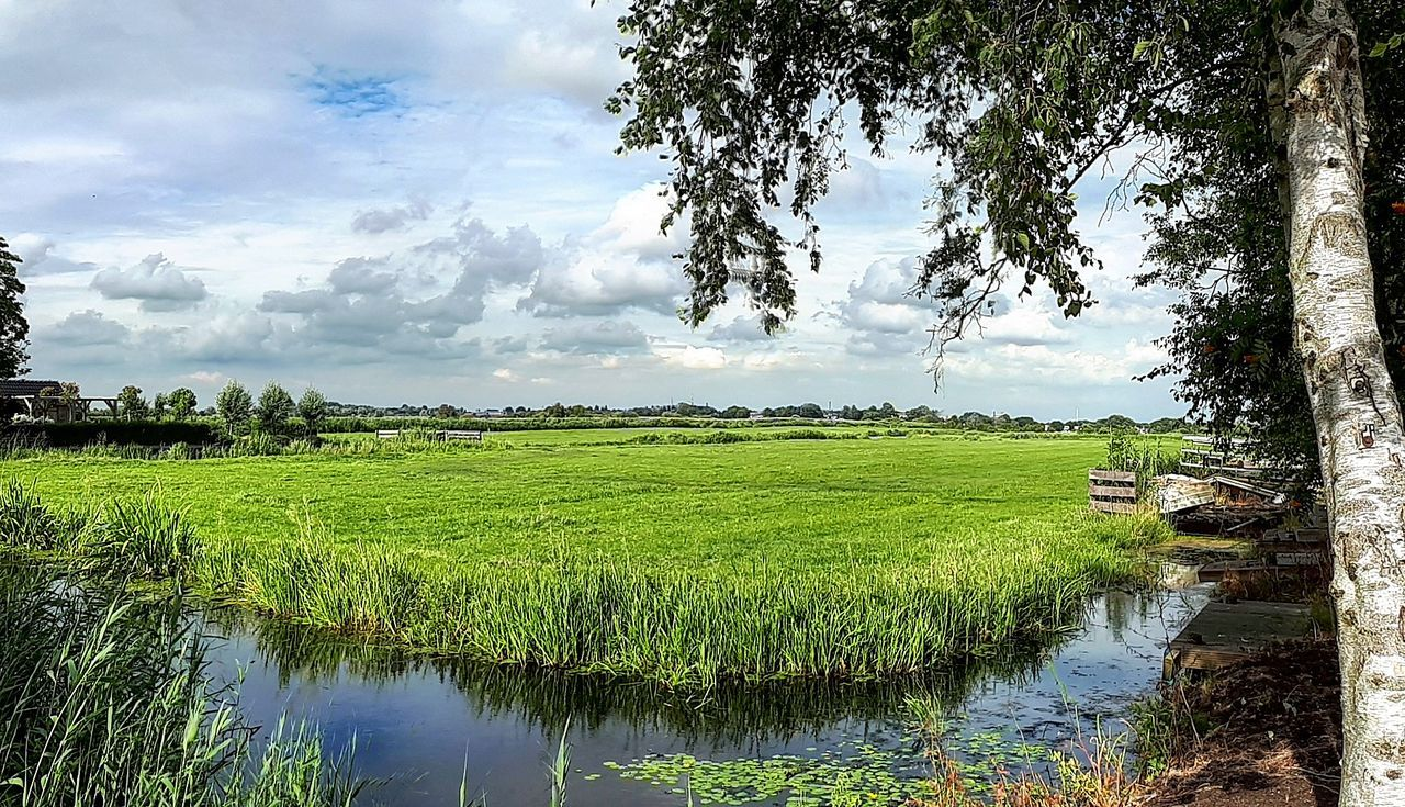 Water Reflection Agriculture Crop  Cloud - Sky Tree Lake Rural Scene Rice Paddy No People Food Outdoors Nature Beauty In Nature Freshness Day Landscape Sky Flood Scenics
