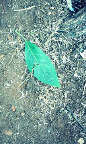 Leaf Nature No People Close-up Fragility Outdoors Day Plant Muddy