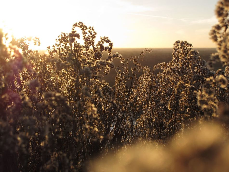 On the hill Nature Beauty In Nature Graases Nature_collection Sunlight Scenics Landscape Sunset Golden Hour Plant Landscape_Collection EyeEm Nature Lover View From The Top Sunbathed Canon