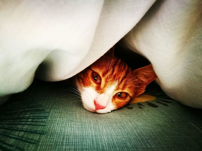 Hide and seek Check This Out Kitten Kittenoftheday Ginger Cat Ginger Kitten Hidingplace Under The Cushion Peekaboo Too Cute That Look Sad Kitty Bestfriend Relaxing Chillaxin' Cat