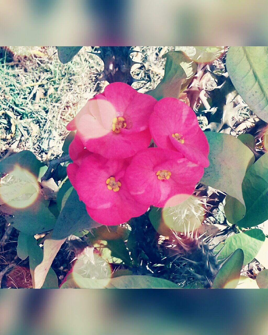 flower, petal, nature, flower head, leaf, rose - flower, fragility, beauty in nature, freshness, no people, indoors, day, close-up