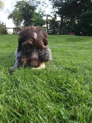 Dog Pets One Animal Domestic Animals Grass Animal Themes Mammal Green Color Tree Day Outdoors No People Nature Close-up Sky Pet Portraits