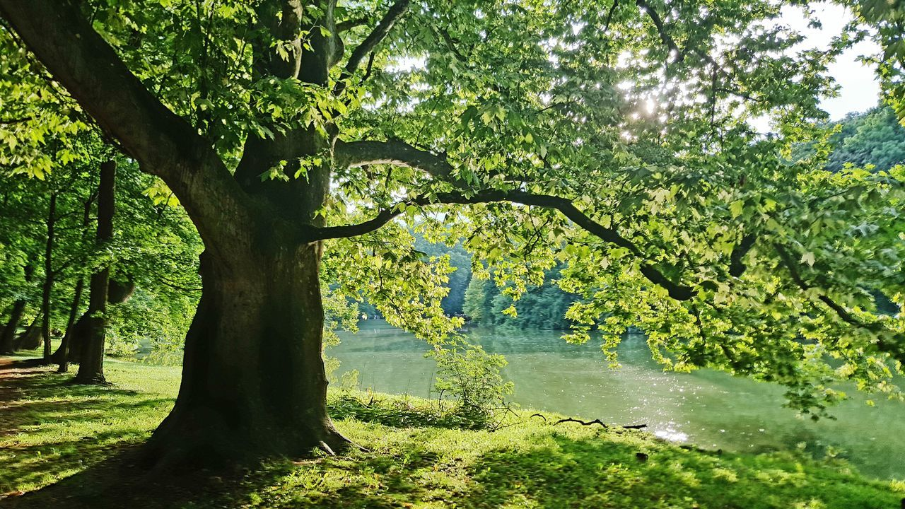 Old Tree Brunszvik Caste Park, Hungary Nature_collection Nature Photography
