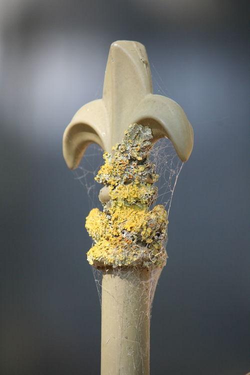 Fluer De Lis Fencepost Moss Spiderweb