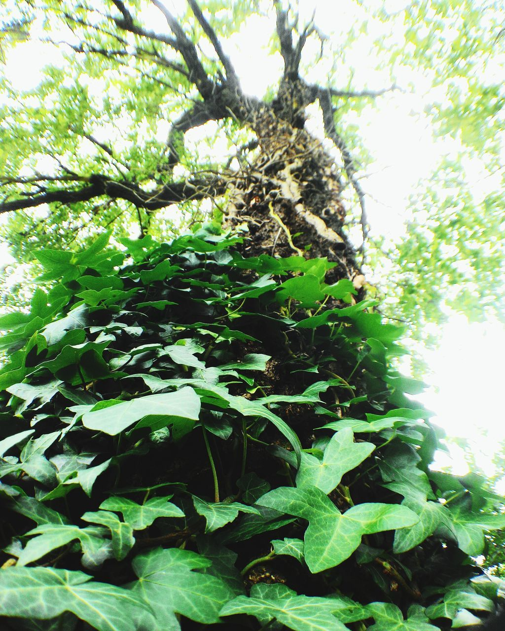 growth, nature, tree, green color, no people, plant, leaf, day, low angle view, outdoors, branch, beauty in nature, close-up, fragility, freshness