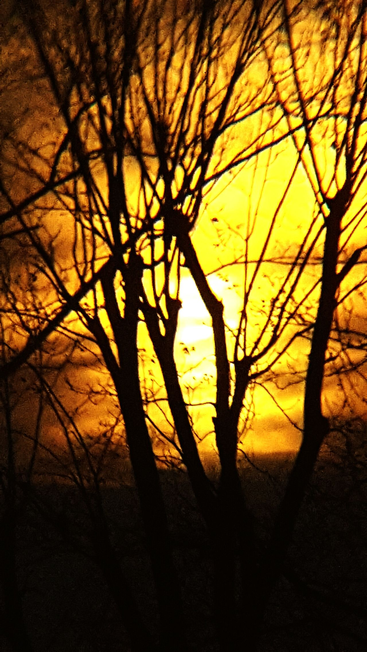 Sunset Silhouette Bare Tree Beauty In Nature Sunset Through The Trees Sunset Silhouette Sunset✨trees✨ Bare Branches Pecan Trees