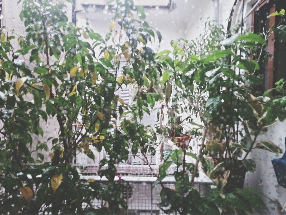 Rain :3 Rain Rainy Daysrain