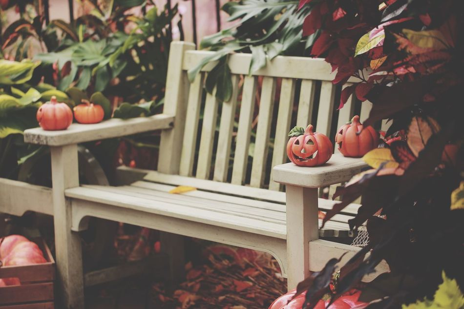 Beautiful stock photos of halloween, Bench, Day, Focus On Foreground, Front Or Back Yard
