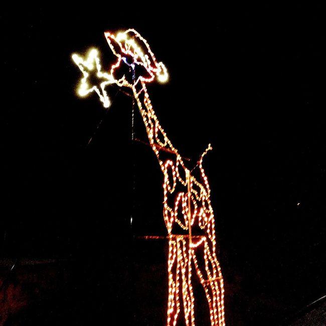 Zoo Lights Holiday Nights! 2015 San Antonio Zoo Brackenridge Park