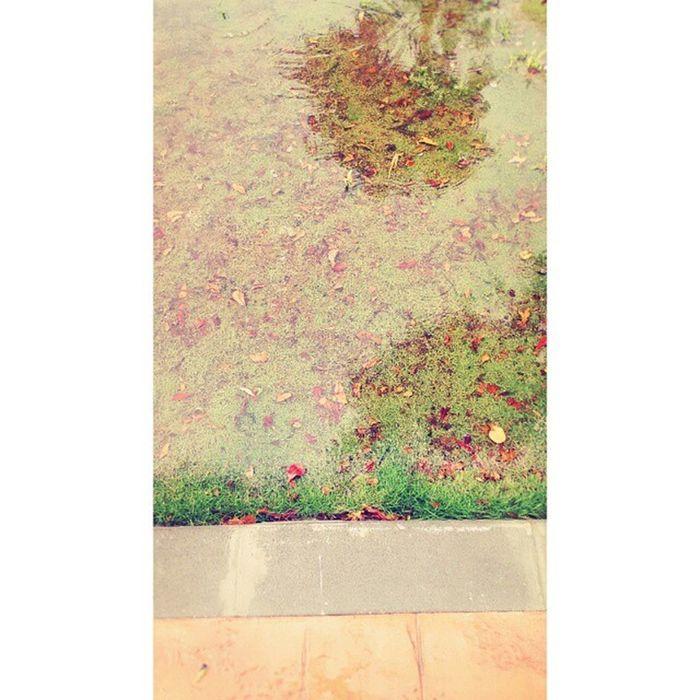 雨...大..... 草地要變成池塘了! Leaves Grass Floor Rainy Water Ponding 下雨 雨水 落葉