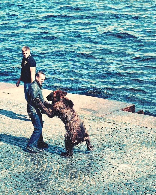 Everyday Lives Man Bear Domestic Pets Moscow Russia Extraordinary  Photography Nikon D5100