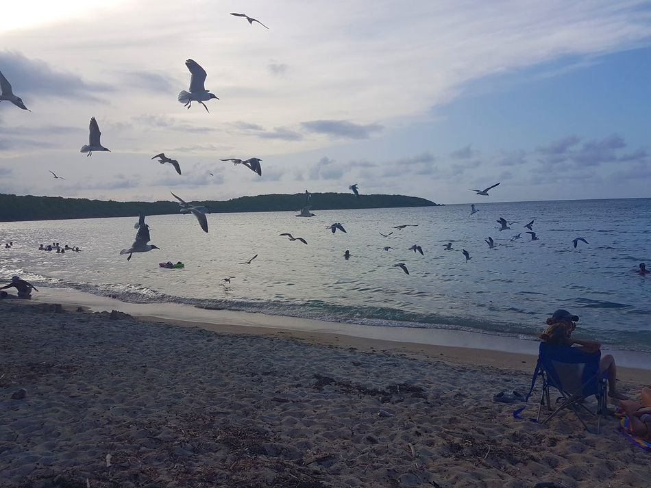 Bird Large Group Of Animals Flock Of Birds Animals In The Wild Sea Seagull Nature Beach Fajardo, PR Puerto Rico Fajardo 100 Days Of Summer Vacations Beauty In Nature Sky Water Summer Sommergefühle Lets Go. Together.