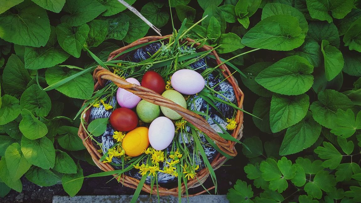 Easter Easter Ready Easter Eggs Hello World Magic Bestoftheday Plants Garden Flowers,Plants & Garden Plants And Flowers Purple Pink Landscape Nature Photography Naturelovers Spring Springtime Easteregg Nature_collection Nature Atmospheric Mood Colors Colorful Colourful Colours
