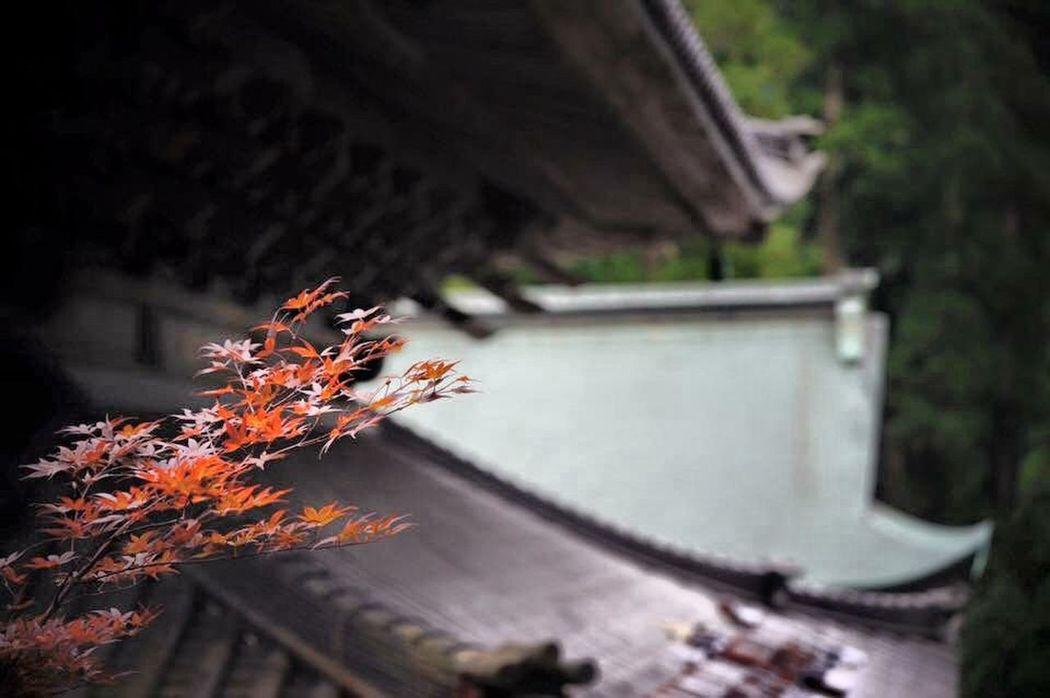 福井 永平寺