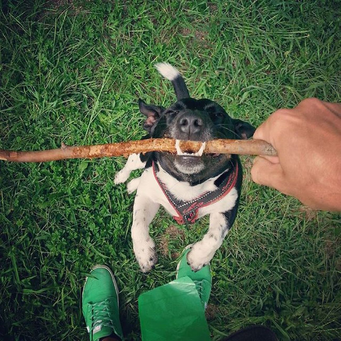 Fishing Dog Woodenstick Dogsitter Jackrussell