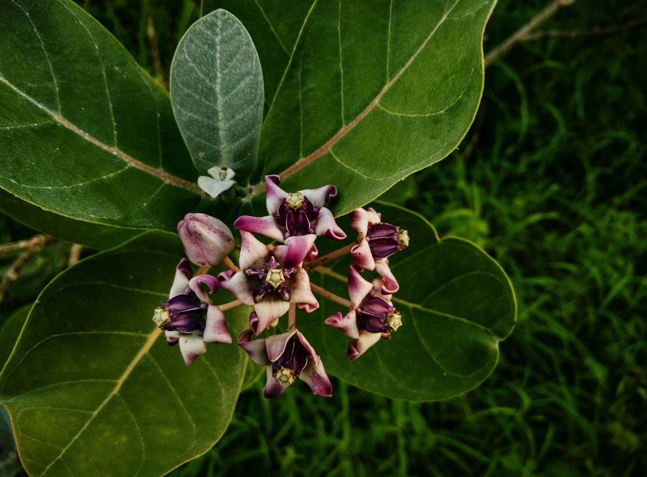 leaf, growth, green color, nature, plant, freshness, beauty in nature, flower, day, fragility, outdoors, no people, close-up, lilac, flower head
