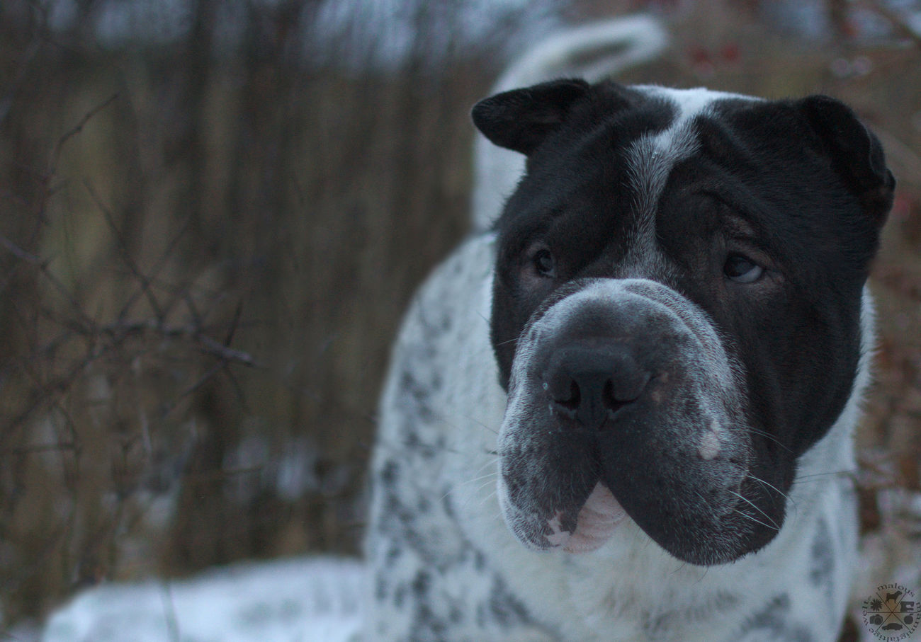 One Animal Pets Dog Domestic Animals Animal Themes Portrait No People Outdoors Schnee Celle Braunschweig Hannover, Germany Nature Hundefotografie Dog Photography Hund Snow