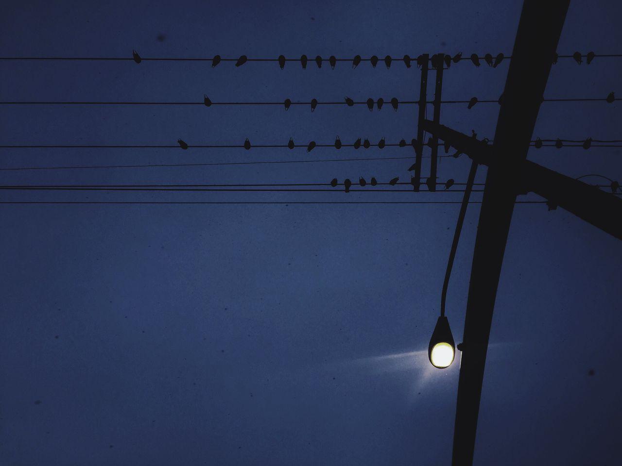Dark Darkness Birds Lookingup Looking Up Dark Skies Dark Sky Gloomy Weather Gloomy Day Gloom Evening Electric Lines Wires In The Sky