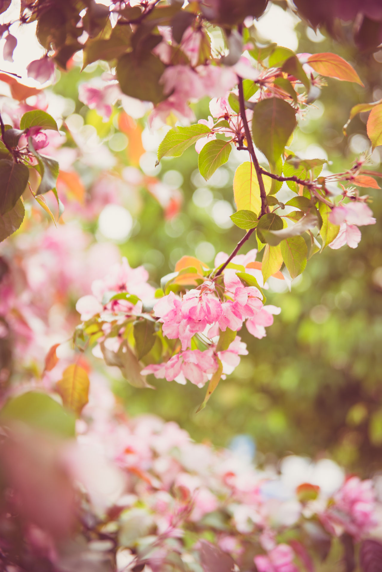 Beauty In Nature Blooming Branch Close-up Day Flower Flower Head Focus On Foreground Fragility Freshness Growth Nature No People Outdoors Petal Pink Color Plant Tree