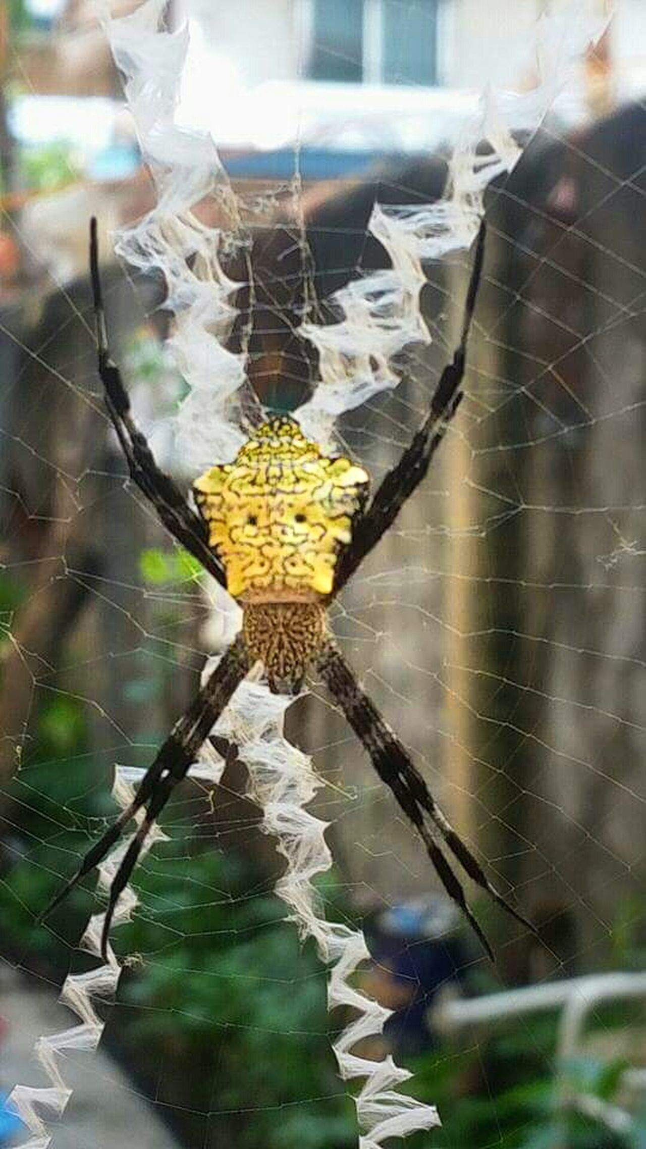 Spinne Spinnennetz Arachnid Spider Spiderweb X On The Web Insect Insect Photography Bug Bugs Life Macro Photography