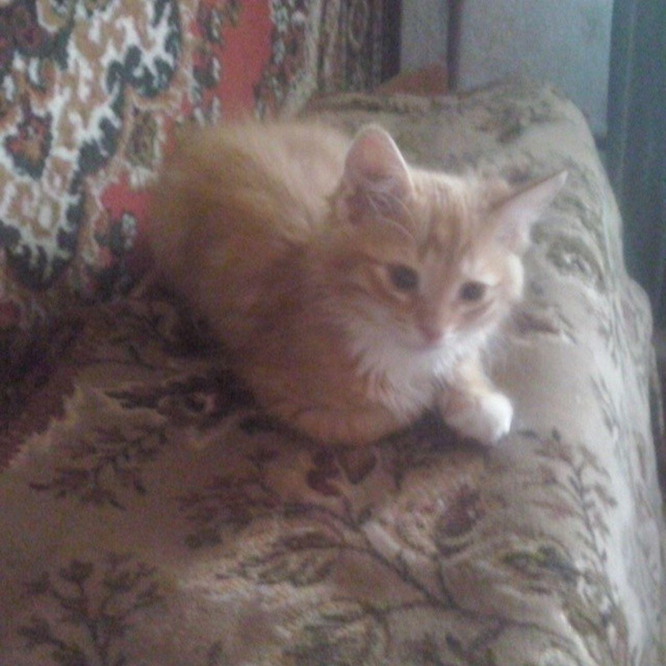 Тимка Люблю_кошек ЛюбителямКошек кошки