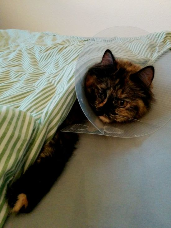 Cone Days Catcontent Recovering