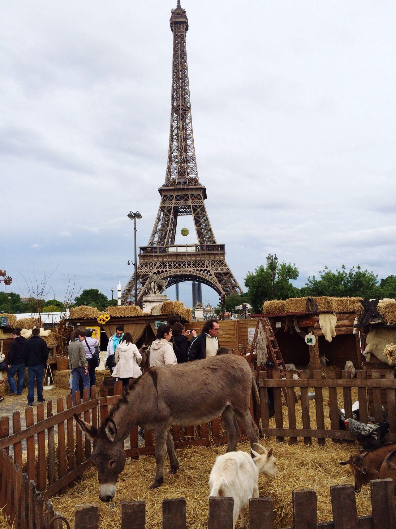 Paris May 2014... Paris ❤ Tour Eiffel Eiffel Tower Exibition Farm And City Farm Animals Contrast Village Village Vs City