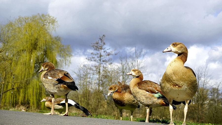 My Favorite Photo Nilgans-Familie EyeEm Best Shots - Nature EyeEm Deutschland Streamzoofamily For You ;-)