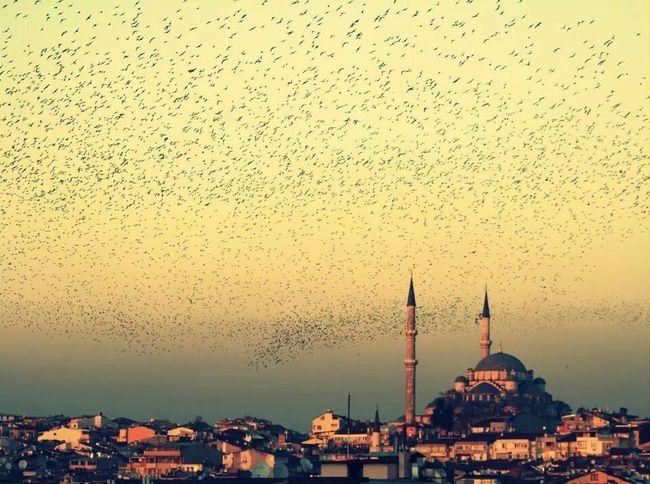 Birds Mosque Nature Sunrise