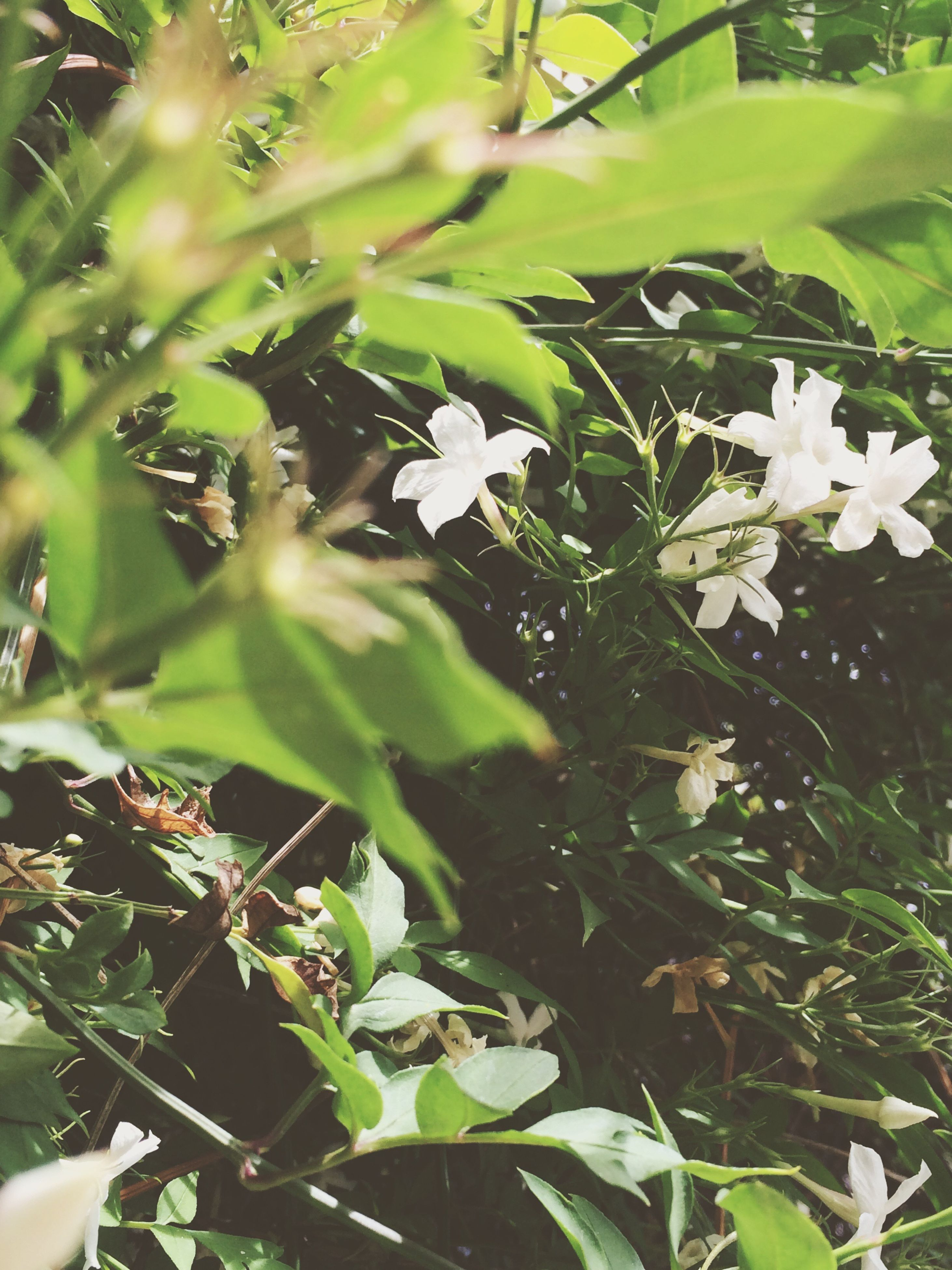 growth, flower, freshness, white color, leaf, fragility, beauty in nature, plant, petal, nature, green color, blooming, close-up, flower head, focus on foreground, in bloom, blossom, outdoors, day, white, no people, botany, stem, growing, stamen, green, selective focus, tranquility, pollen, lush foliage