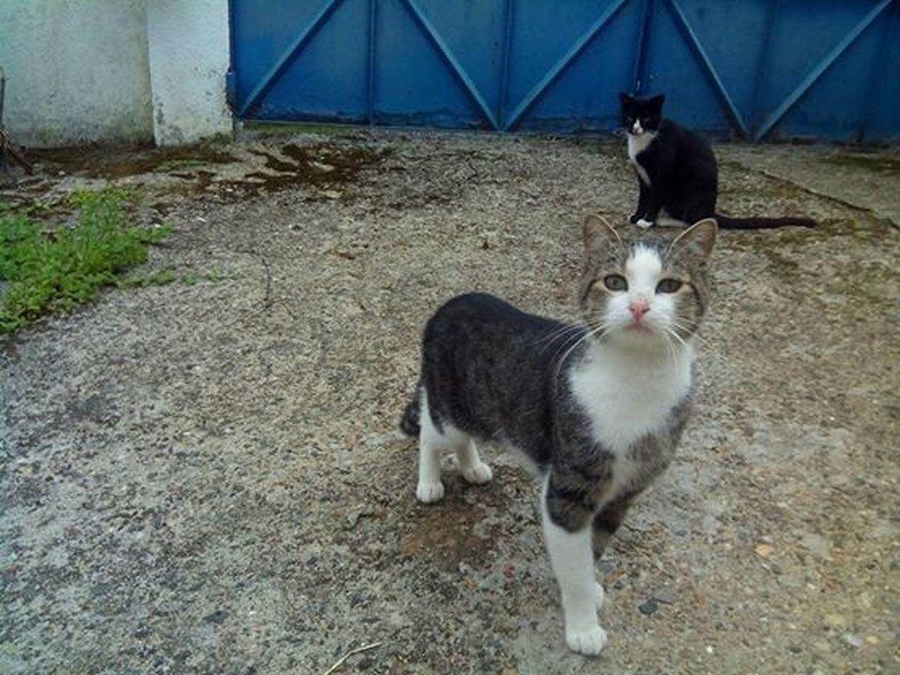 Cats Cutecats Proudcat