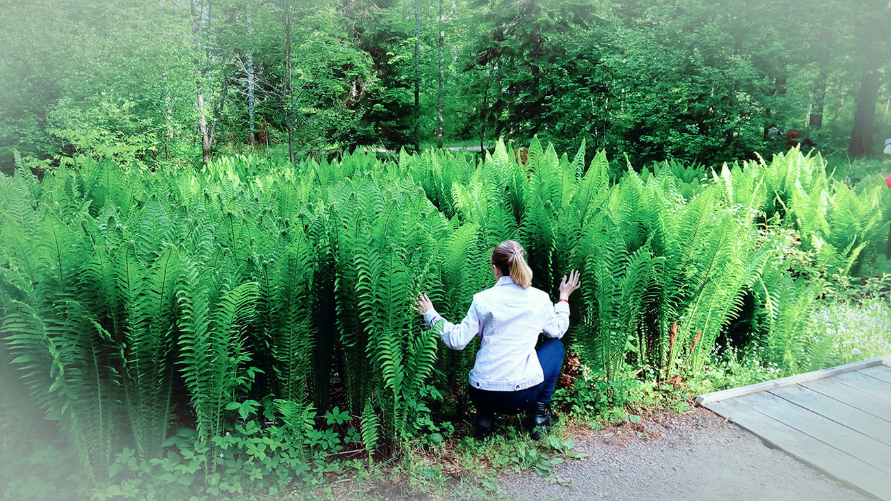 Plants 🌱 Arboretum Kotka, Finland