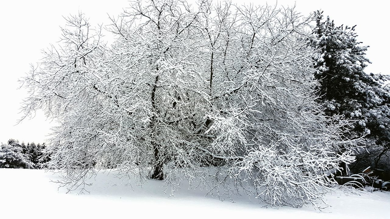 Winter Winter Wonderland Winter_collection Winterscapes Snow ❄ Snow On Trees Wisconsin Winter Wisconsin Life Winter Landscape Winter 2016 Winter Walk Winter Time Winter Day Nature_collection Nature Photography Nature_perfection Nature Beauty Snow Is Beautiful Snow Is Here Snow Is Cold Crazy Nature Adventure Club