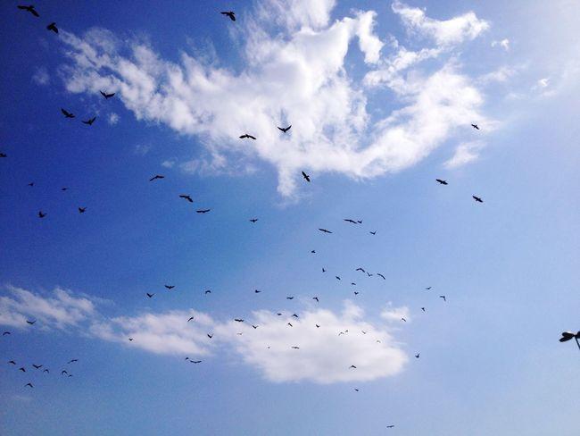 Gökyüzünün Kara Sevdası Mavinin Ozgur Kuşları Istanbul 📸💙🙃