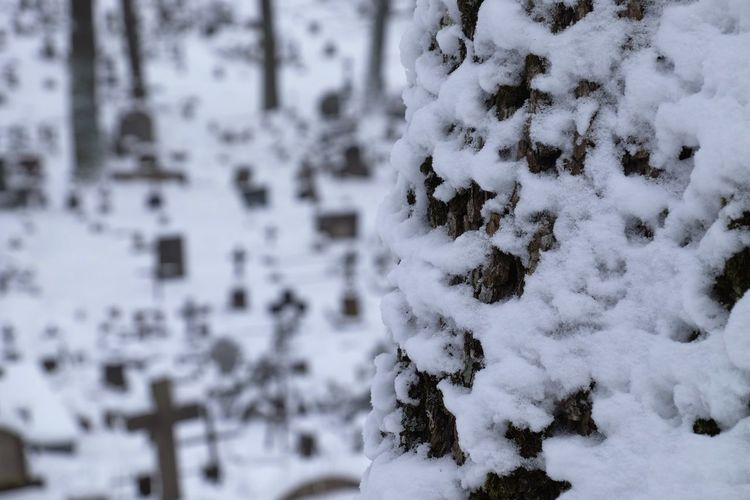 Beauty In Nature Close-up Cold Temperature Covering Day Frozen Nature No People Out Of Focus Grave Yard Outdoors Semetary Snow Tree Weather White Color Winter