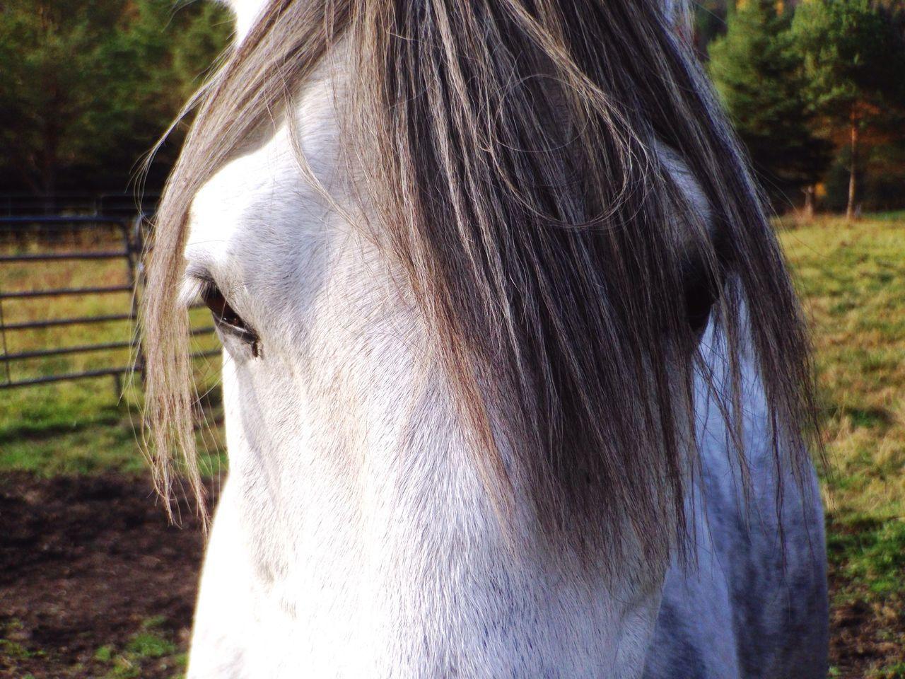 Beautiful stock photos of farm, Animal Eye, Animal Hair, Animal Head, Animal Themes