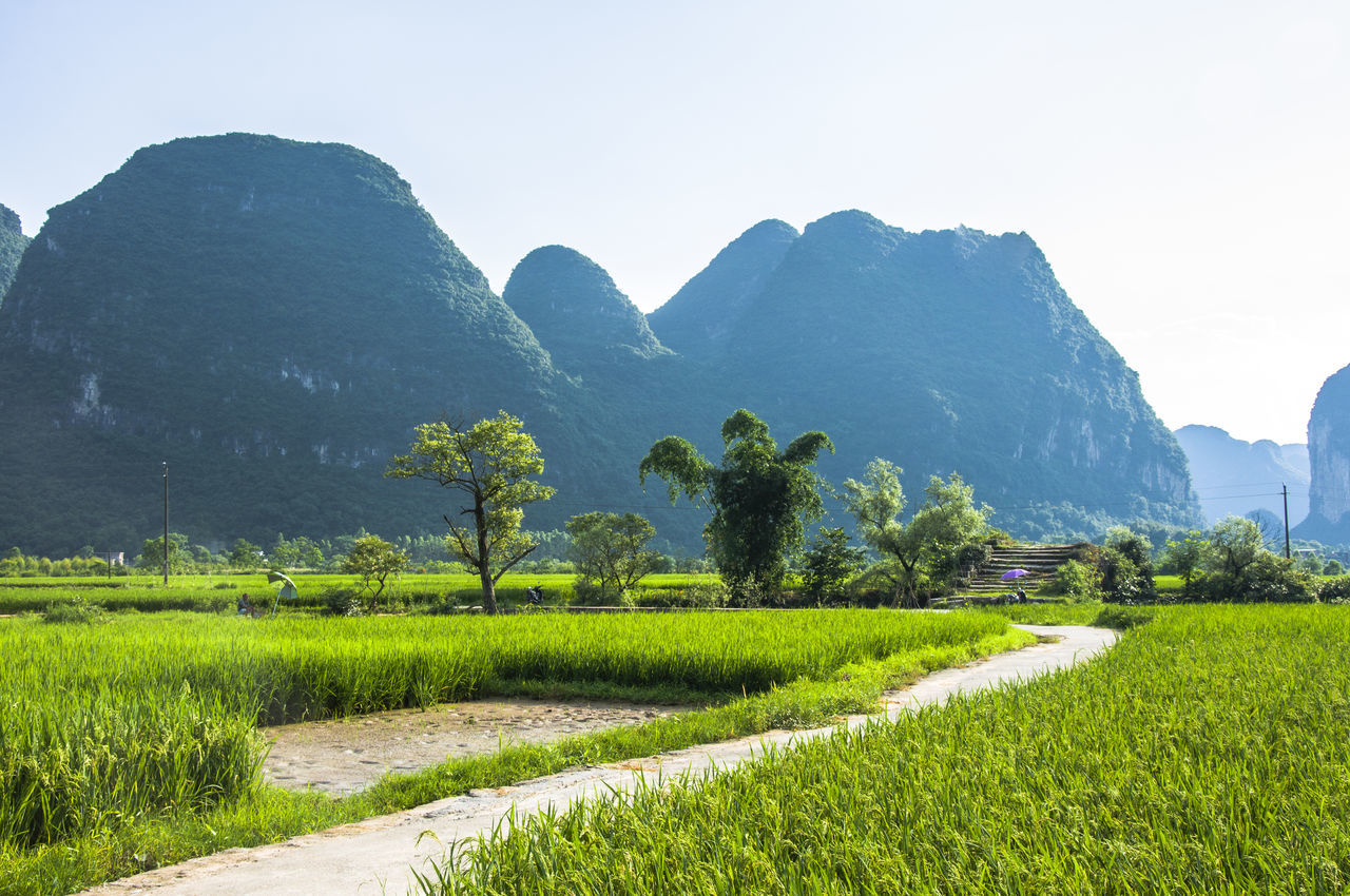 mountain, beauty in nature, scenics, nature, tranquil scene, tranquility, agriculture, green color, mountain range, landscape, field, outdoors, grass, crop, day, idyllic, growth, no people, plant, rice paddy, rural scene, sky, clear sky, water, tree, terraced field