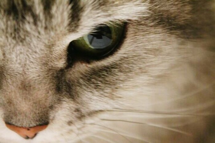 My Love ♡ Cat♡