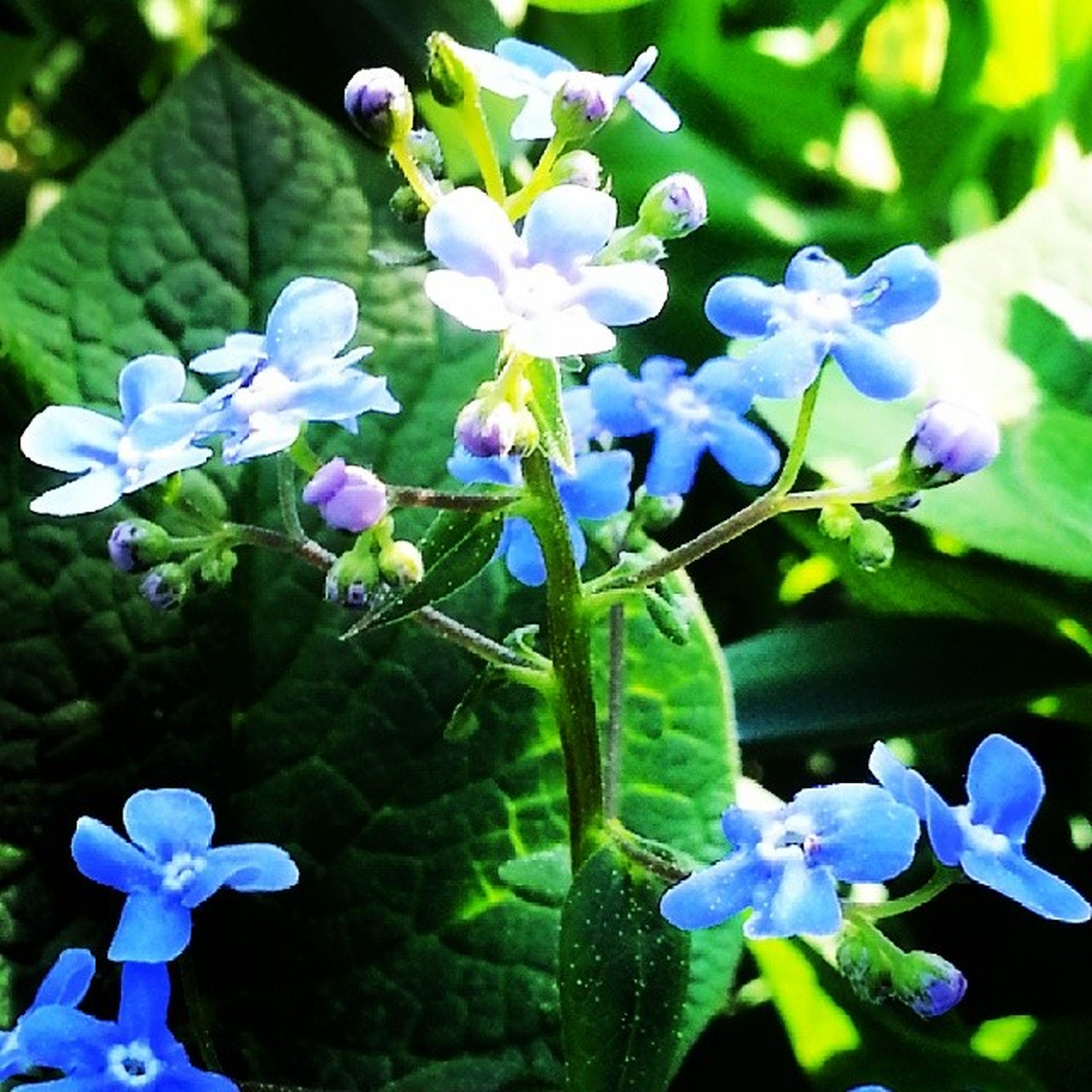 flower, freshness, fragility, purple, petal, growth, plant, flower head, beauty in nature, blue, blooming, leaf, nature, close-up, focus on foreground, in bloom, stem, hydrangea, park - man made space, water