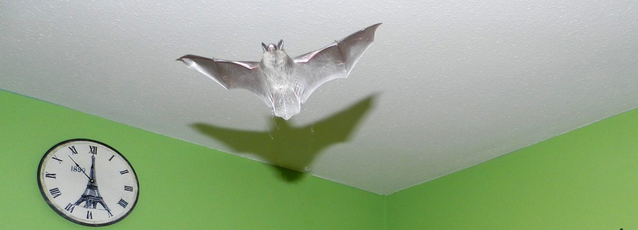 5 To Midnight Animals Bat Close-up Fledermaus Green Color No People Time White Color