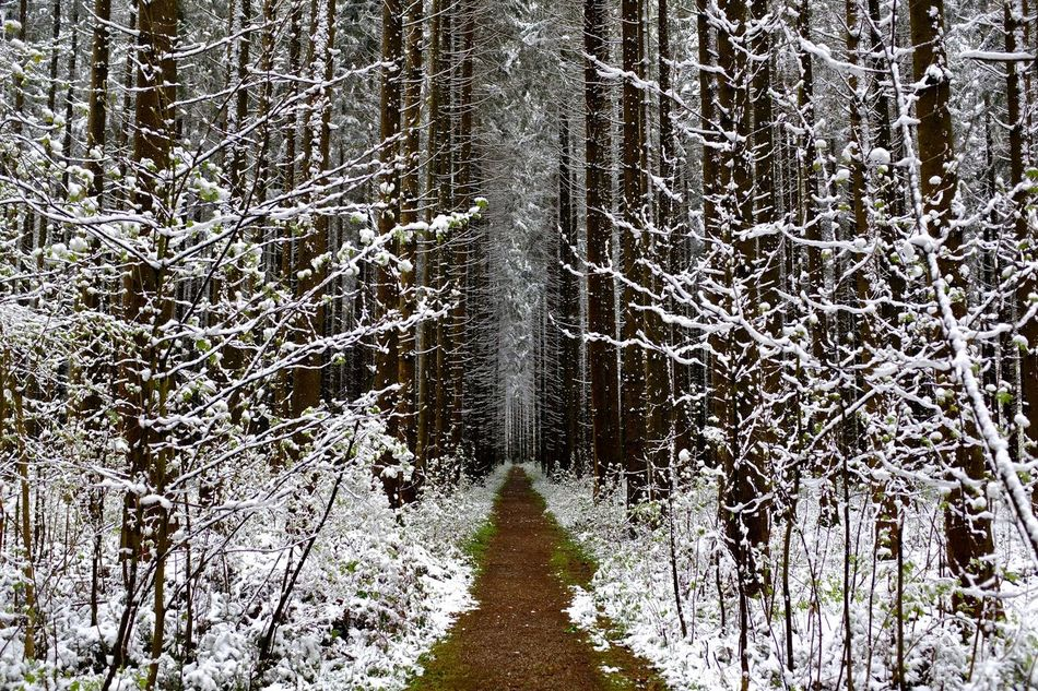 April 2017 Cold Temperature Forest Landscape No People Outdoors Scenics Snow Tree