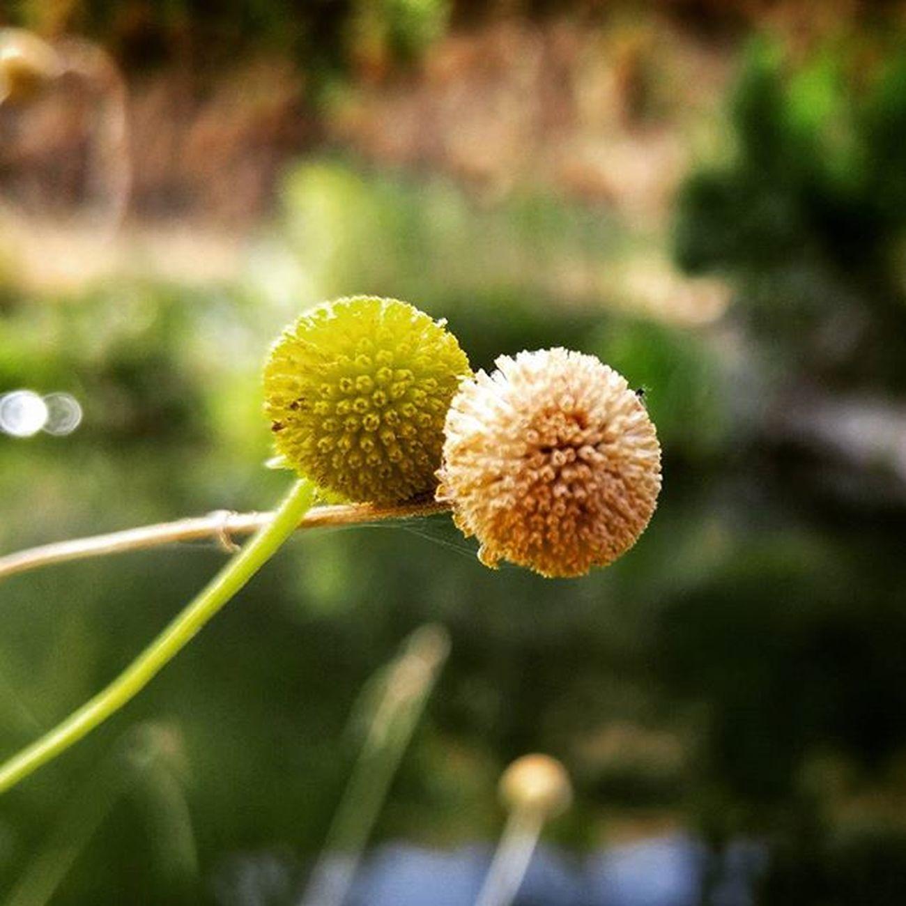 Putahcreek Wintersca Instahike Hike Walk Nature Flower Creek