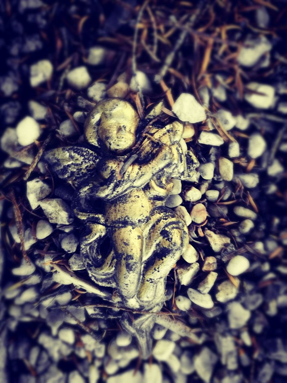 Nature Close-up Outdoors No People Angel Angel Statue Angel Wings Angelwings  Angel On The Ground HuaweiP9 Nature All Soul's Day All Souls Cemetery Cemetery Photography