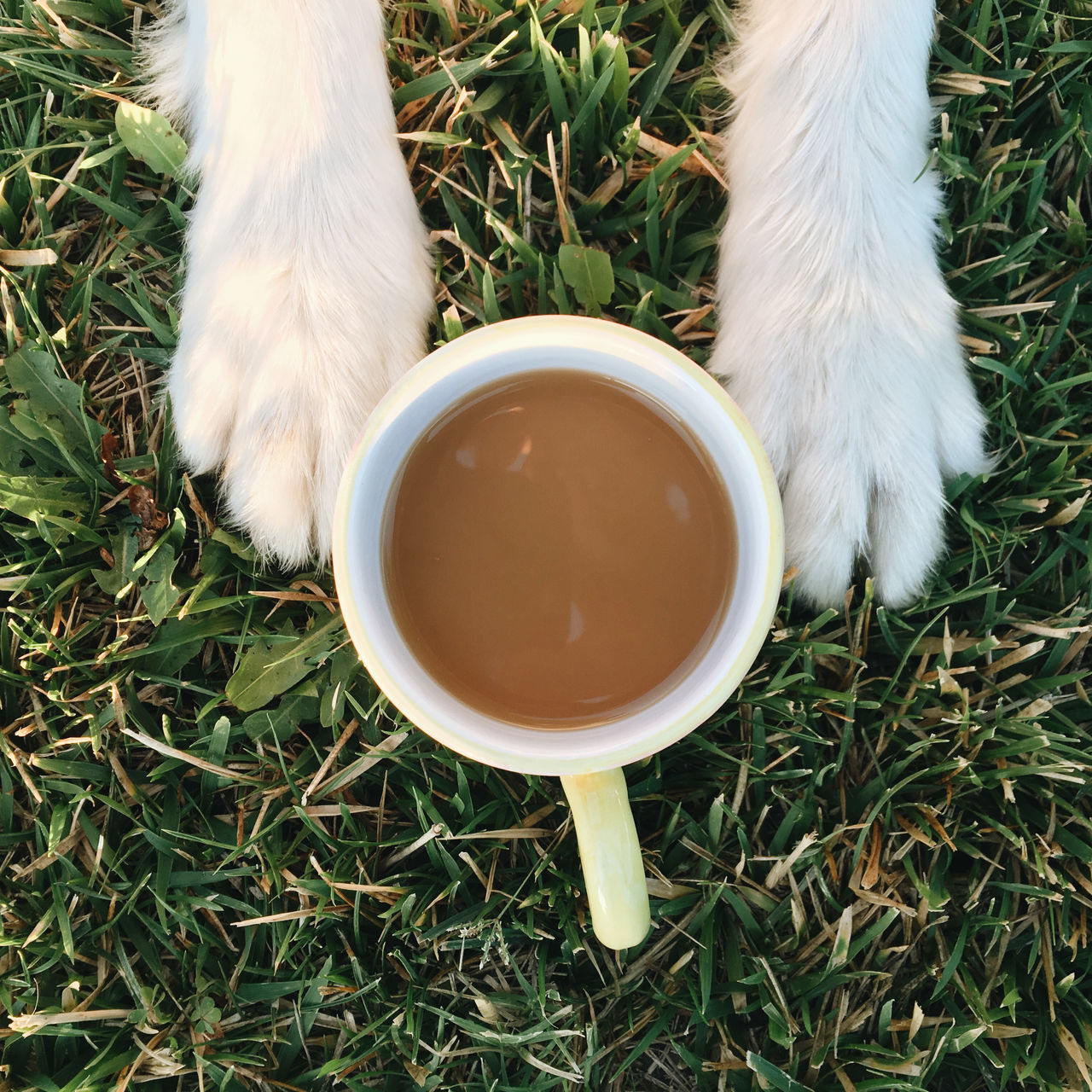 Animal Themes Close-up Day Dog And Cup Dog Paws Domestic Animals Grass Mammal Nature No People Outdoors Overhead Shot Paws Pets