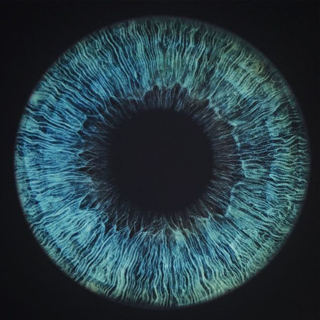 Blue eyes Blue Eyes Macro Photography Eyes Blue Abstract