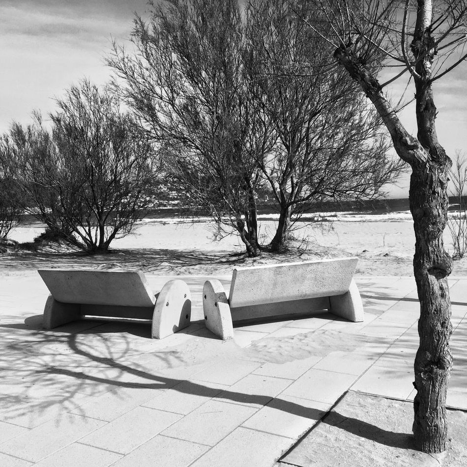 Deux bancs Outdoors Tree Tranquility No People Water Sand Two Noir Et Blanc Blackandwhite Photography Streetphoto_bw