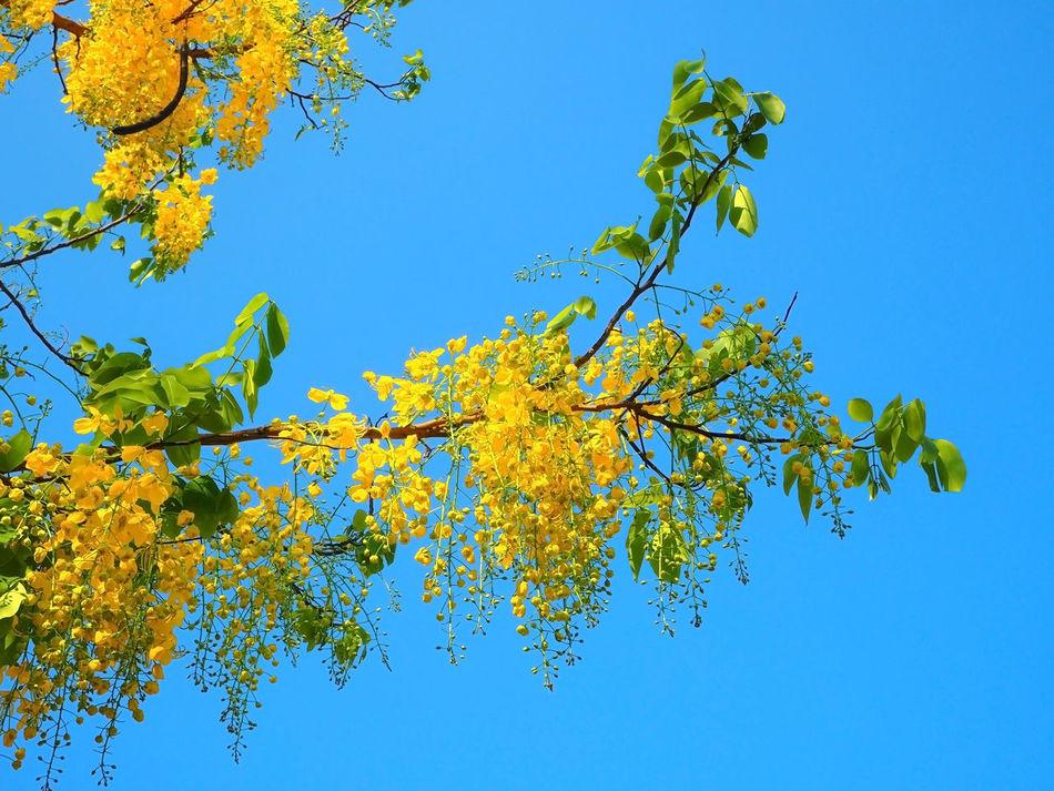 Beautiful stock photos of thailand, Amphawa, Thailand, Tree, beauty In Nature