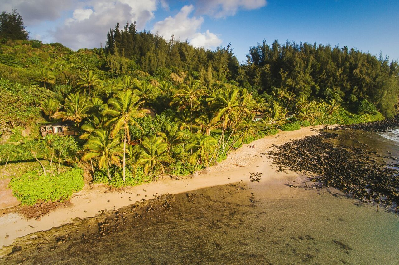 Secreat beach in HAWAII Sand Tree Nature Sky Vacations Shadow Outdoors Cloud - Sky Beach Travel Destinations Growth No People Day Water Beauty In Nature Scenics Landscape Sand Dune Wildlife & Nature Hawaii USA Photos Hawaii Life Nature Sun Kauai Hawaii