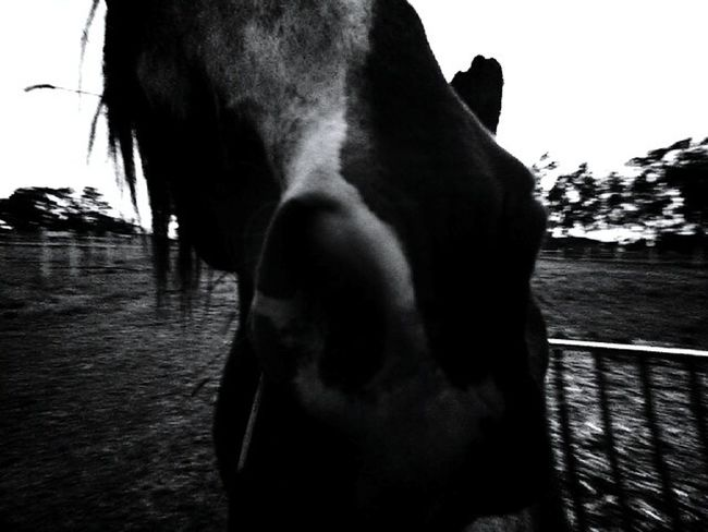 This is my Spirit. Hi! Hanging Out Check This Out Taking Photos That's Me Relaxing Enjoying Life Equine Photography The Essence Of Summer Heyyyyyyyyy Its Hot Spirit Rough Life Horse Life Horse Photography  Horsepower HorseHorselove Horselovers EyeEm Gallery